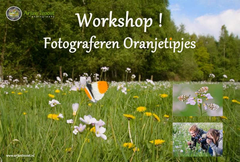 Flyer-workshop-Oranjetipje