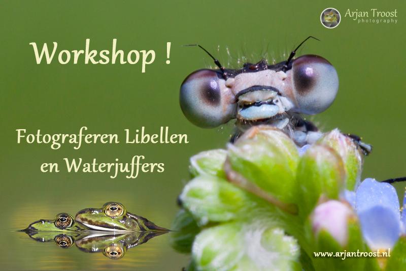 Workshop-juffers-en-libellen-_MG_8238