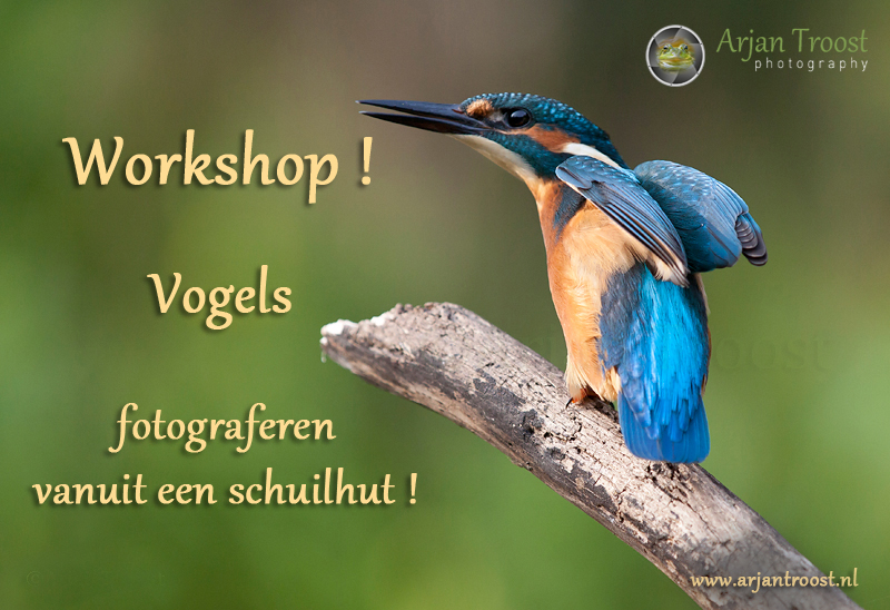IJsvogel-workshop--_MG_2846