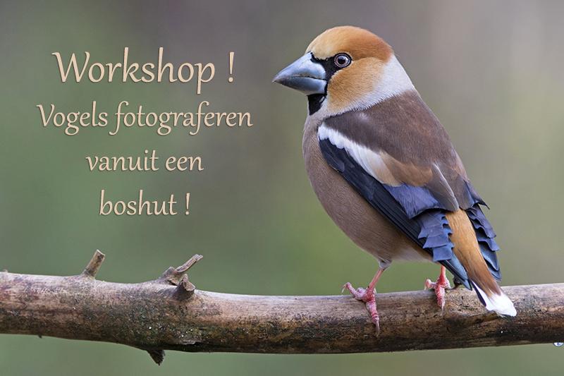 flyer workshop boshut 800  _O1A2762