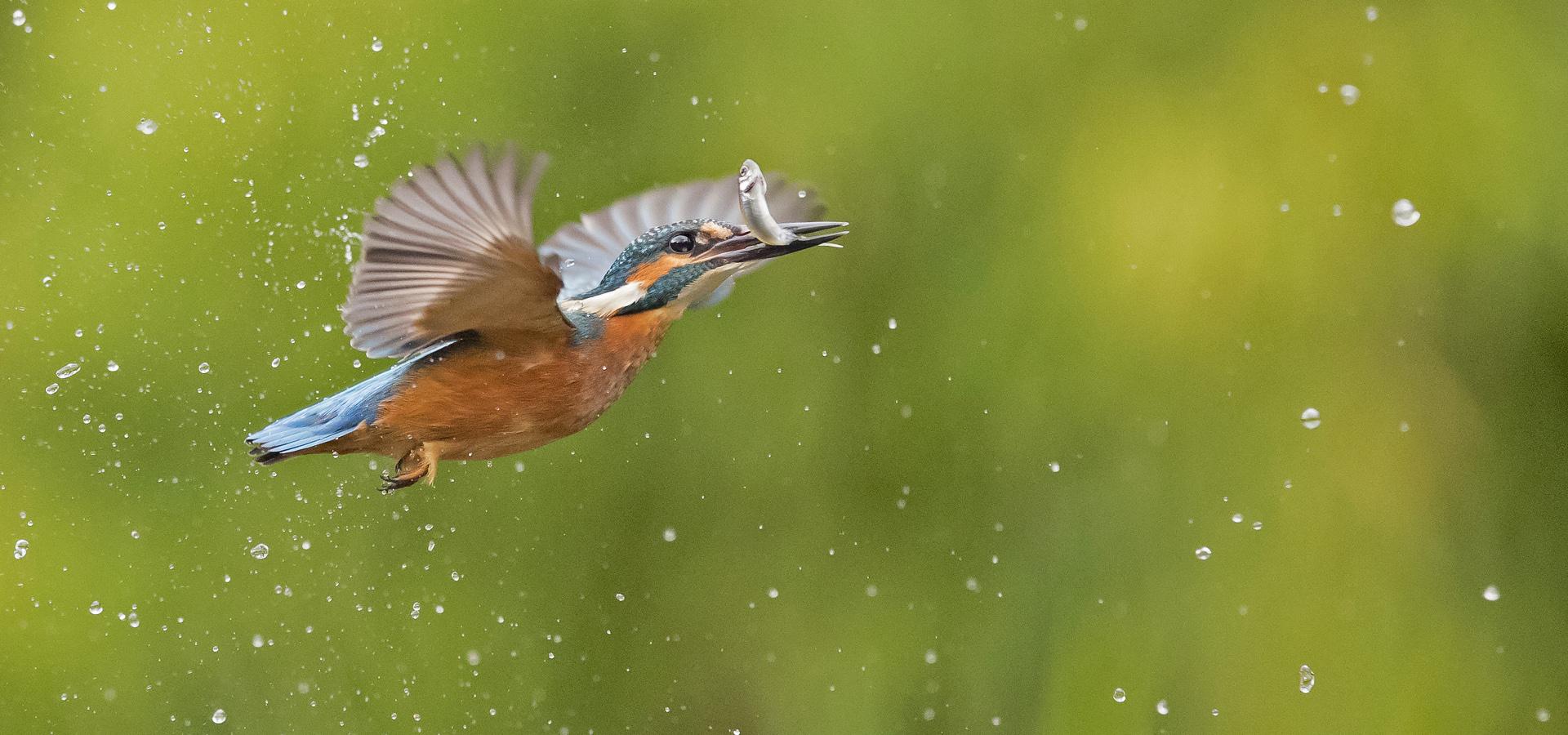 Workshop Vogels Fotograferen